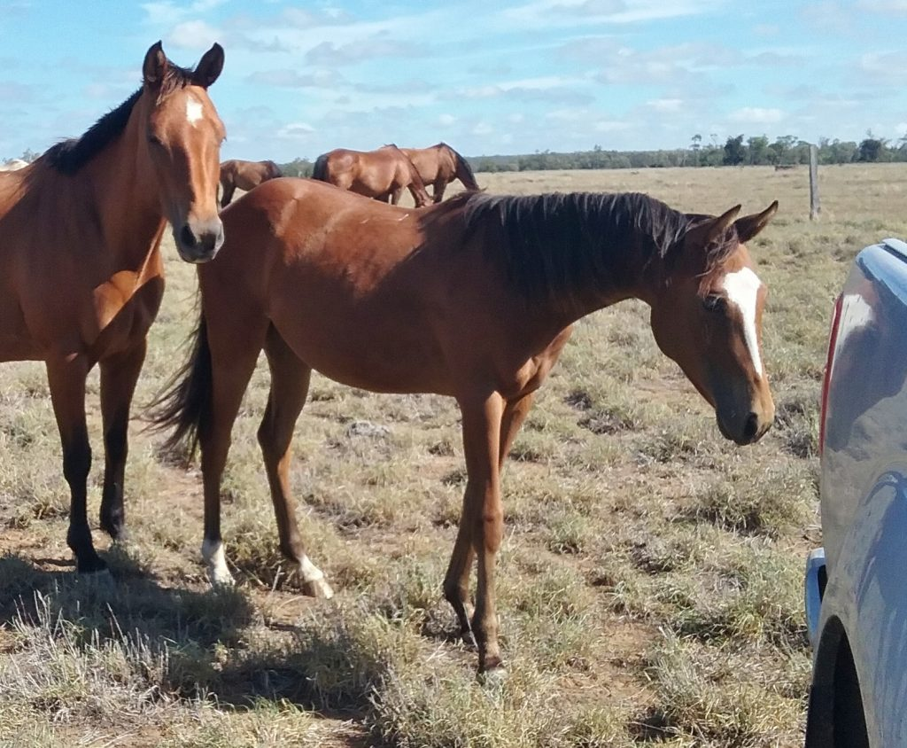 20170303 Hickory Filly 3
