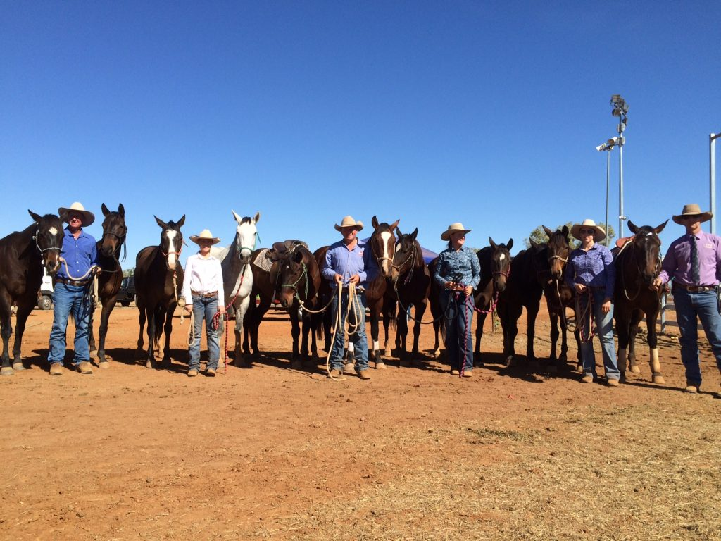 Pictured: Marnies Destiny progeny making an impact at Cloncurry Stockmans Challenge and Campdraft 2015. All of these are by Marnies. Five in the challenges and eight others drafting. Thanks to the Curr families, Macmillan families, Abdy family, Shepherd family, Craven family and Tim Maclachlan. Heaps of scores and big finals!
