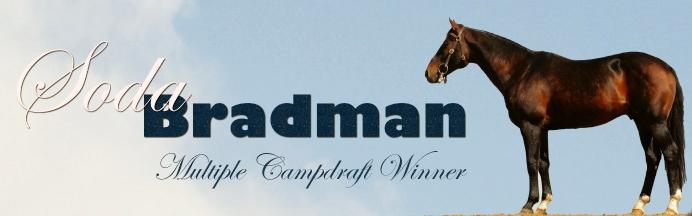 bradman_header